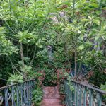 Stairway and greenery