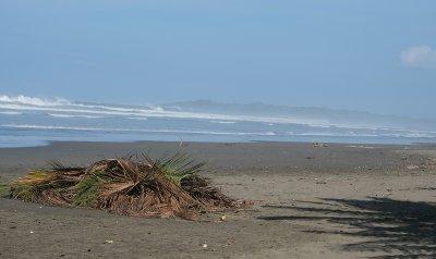 Beach Branch Pile
