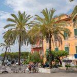 Palm trees harborside